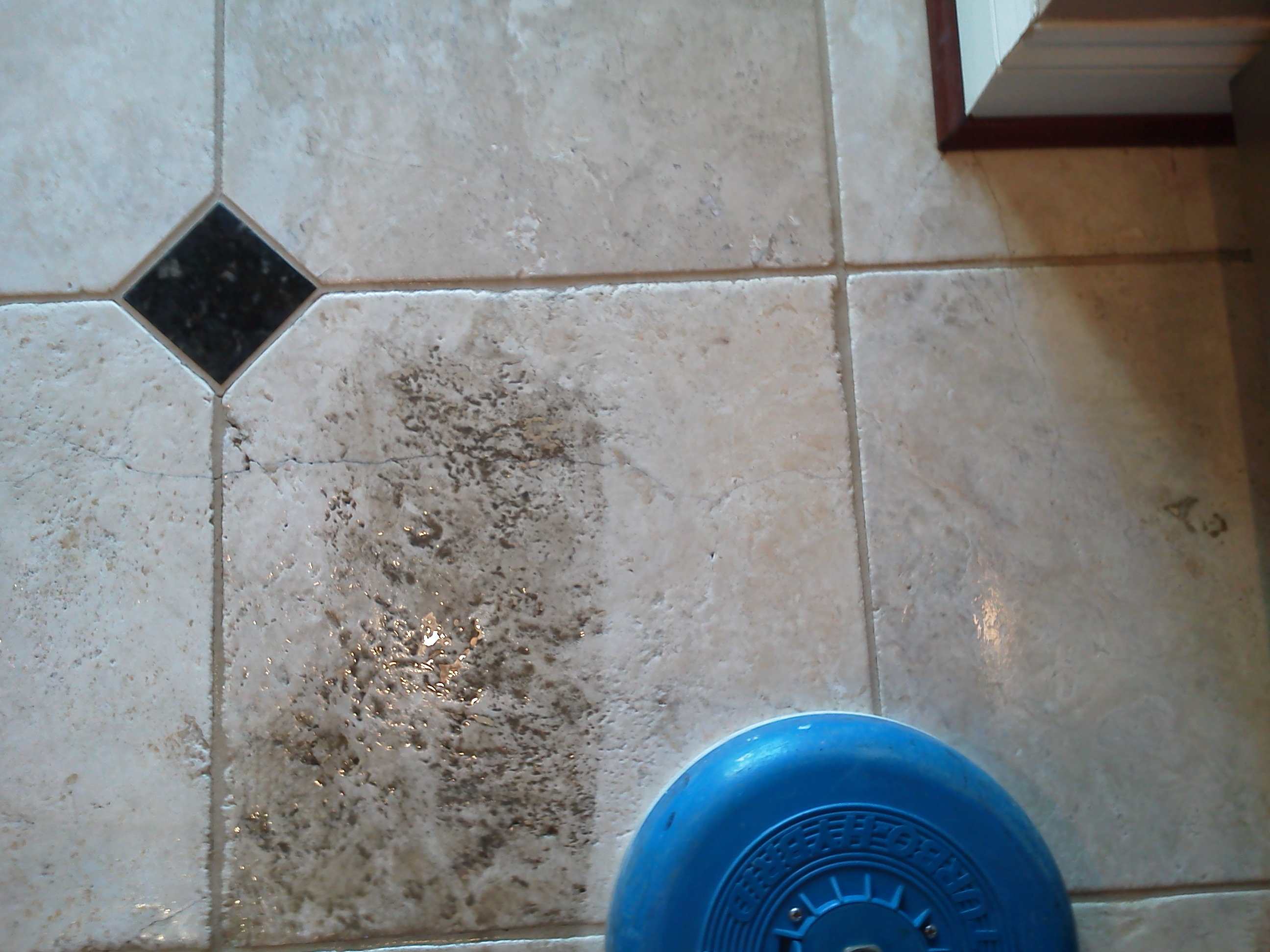 Kitchen Floor Cleaners Cleaning Before After Photos Pristine Tile Carpet Cleaning